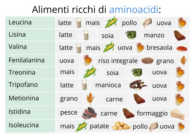 alimenti_aminoacidi